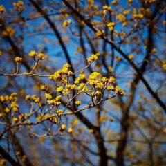 Botanicals 24