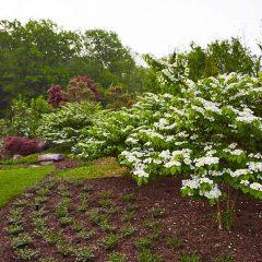 Botanicals 46