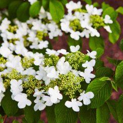 Botanicals 47