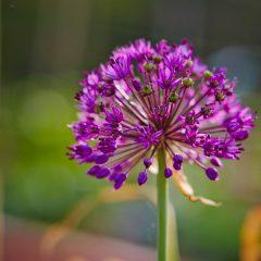 Botanicals 50