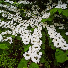 Botanicals 60
